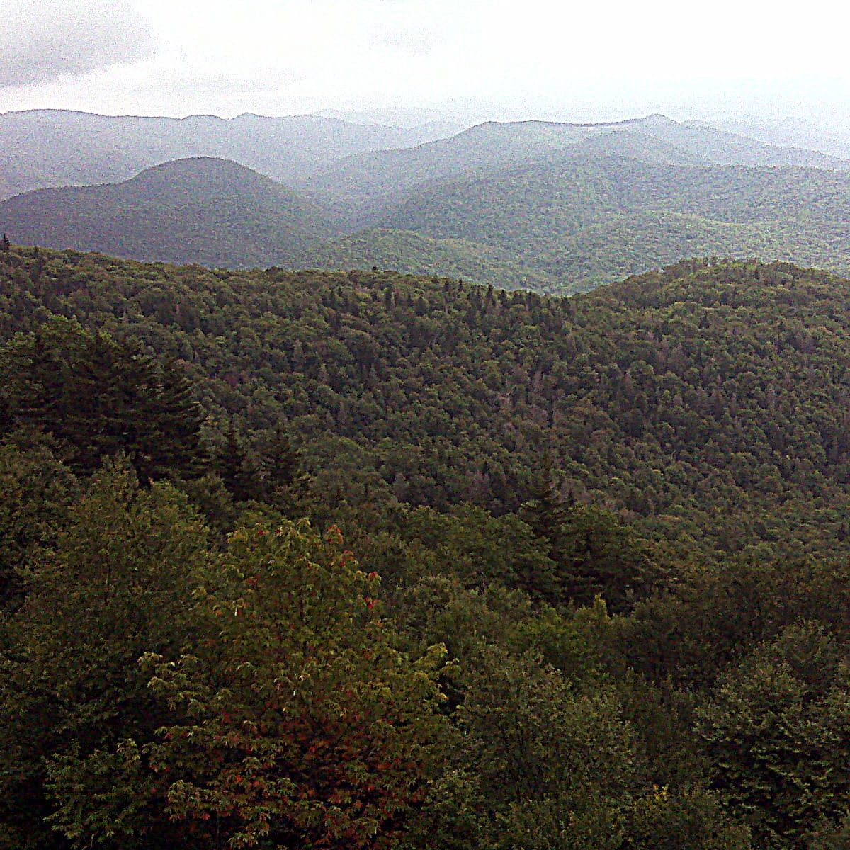 pisgah Forest mountains